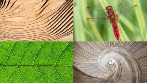 Collage aus 4 Fotos zur Bionik-Ausstellung. Links oben ein Foto mit geschwungenen Holzplatten, rechts daneben eine Wiese mit einem Insekt. Links unten ist ein Teil eines Blattes zu sehen, daneben ein steinernes spiralförmiges Treppenhaus