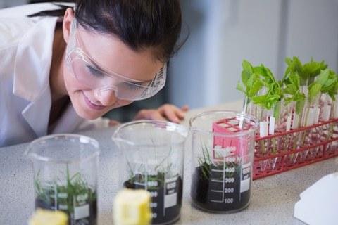 Das Bild zeigt sehr kleine Pflanzen in Schalen und Reagenzgläsern. Sie werden von einer Laborantin beobachtet.