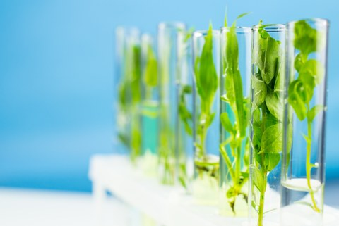 several test tubes with fresh green plants in it
