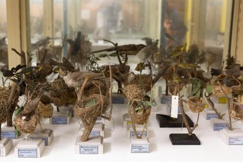 Senckenberg Naturhistorische Sammlungen Dresden, Museum für Tierkunde