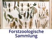 Forstzoologische Sammlung