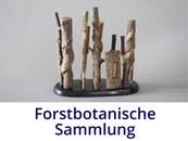 Forstbotanische Sammlung