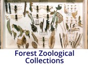 Forest Zoological Collection