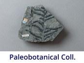 Paleobotanical Collection
