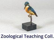 Zoological Teaching Collection