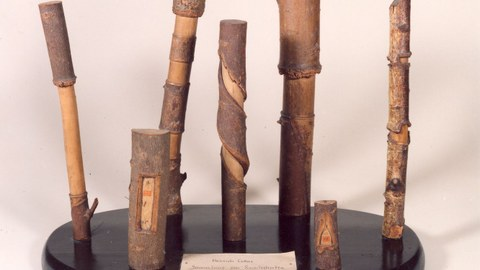 Ringelschnitte von Heinrich Cotta 1806
