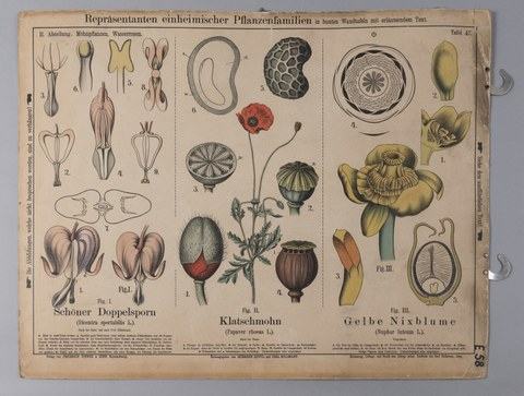 Lehrtafel zur Botanik