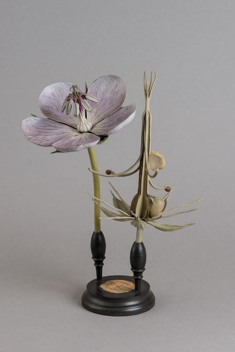 Blütenmodell