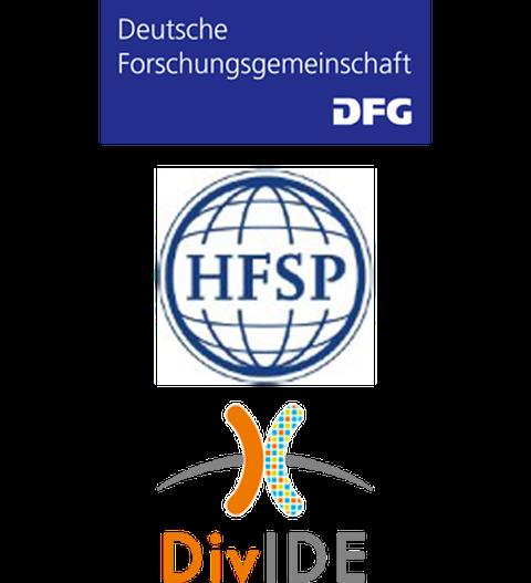 Logo, DFG, HFSP, DivIDE
