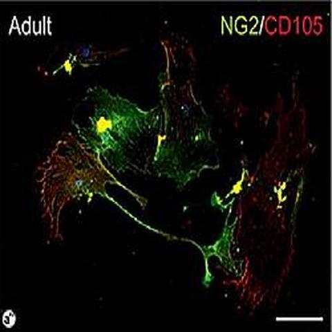 Fig.7 taken from Wittig et al, 2013