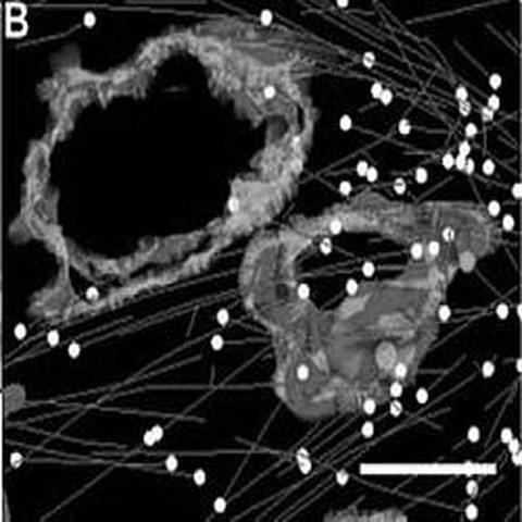 Fig.4 taken from Woog et al, 2012