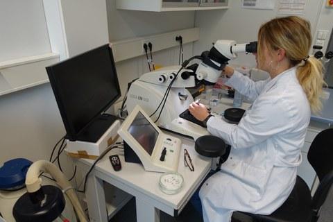Ultramicrotome EM UC6