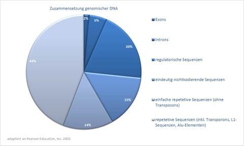 genomische DNA