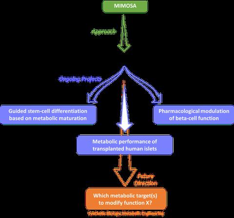 Fließdiagramm der Forschung von Tiago Alves