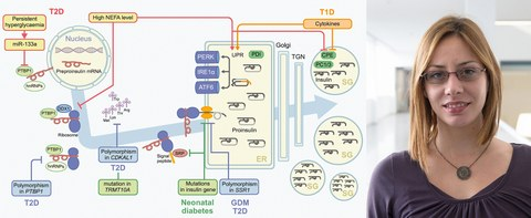 flow chart insulin production