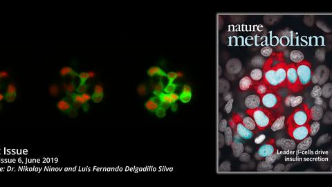 Coverbild Ninov Nature Metabolism