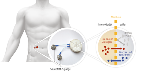 Wirkungsweise des Bio-Reaktors