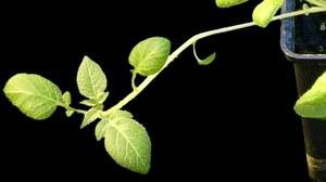 Molbio Pflanzen Forschung