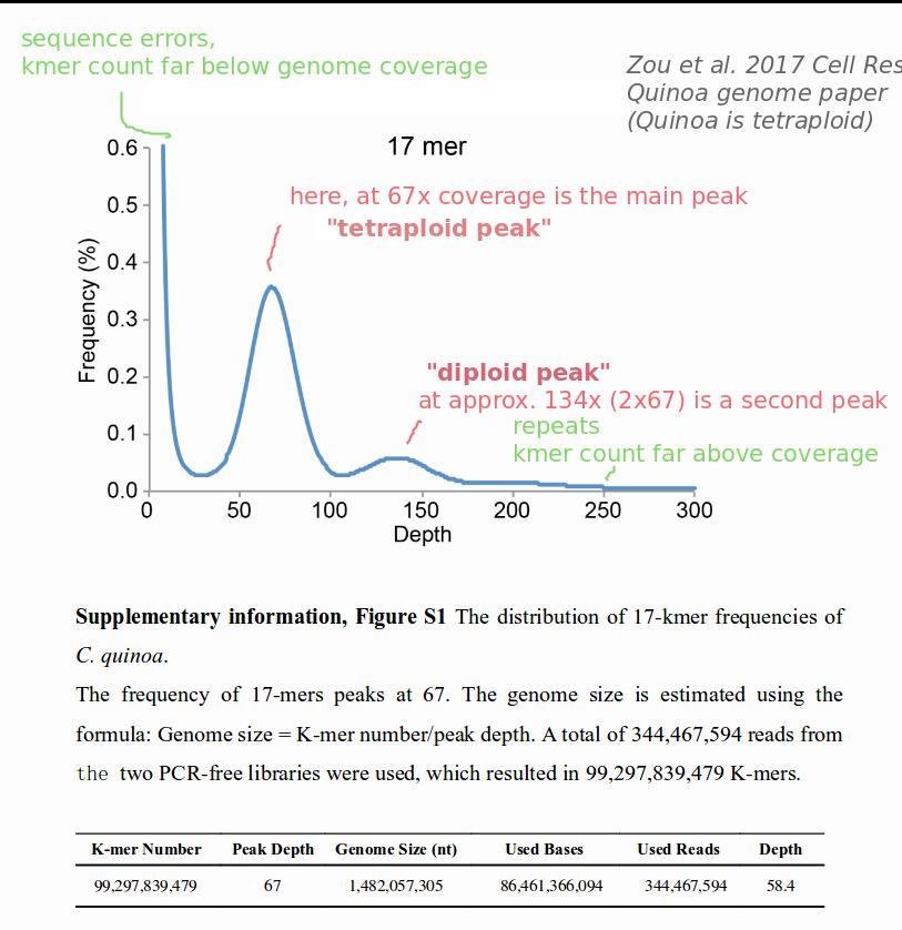 Quinoa genome, kmer plot