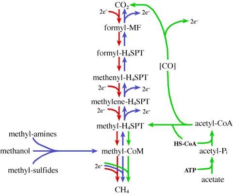 methanogenesis