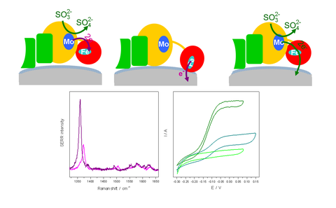 Turnover measurements of biocatalysts on surfaces