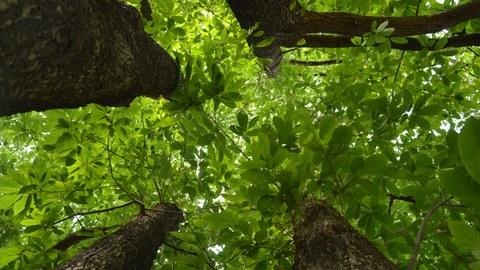Willers-Bau: Bäume im Innenhof