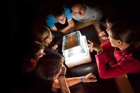 Schüler betrachten eine Nebelkammer