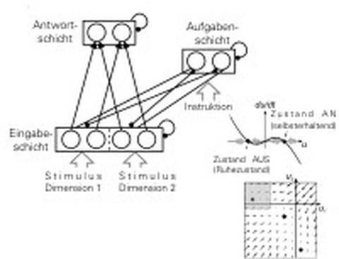 Dynamik neuronaler Netze