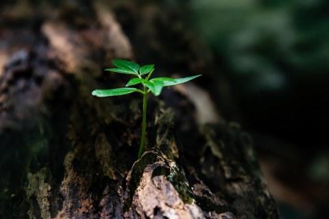kleines grünes Pflänzchen
