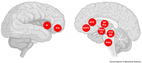Picture taken from Current Opinion in Behavioral Sciences showing activated regions of two brains