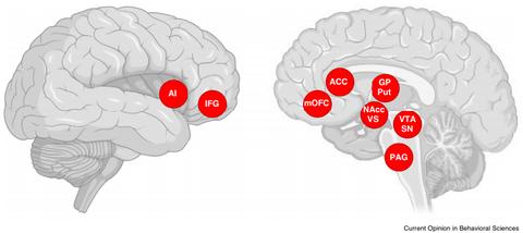 Graphik aus Current Opinion in Behavioral Sciences, die die aktivierten Areale zweier Gehirne zeigt