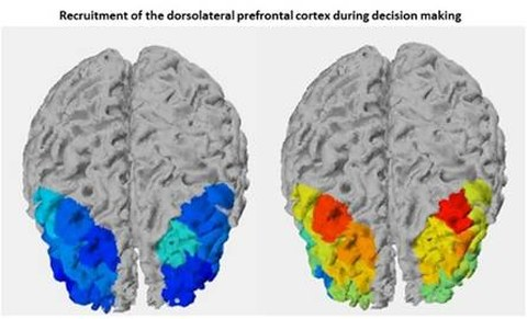 Recruitment of dorsolateral PFC during decision-making