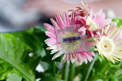 Solarzelle auf einer Blume