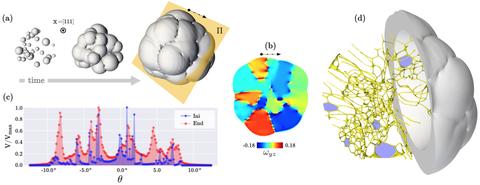 Versetzungsnetzwerk in polykristallinen Material