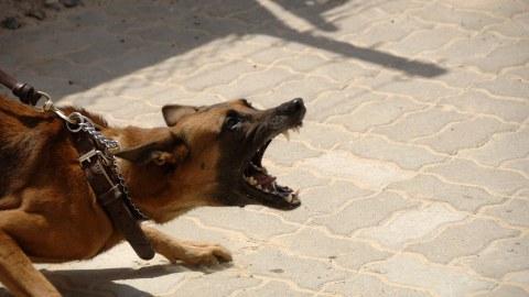 Aggressiver Hund