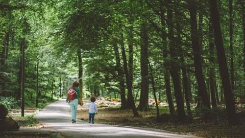 Waldweg_Generationen