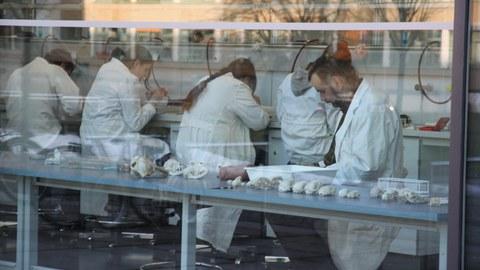 Das Foto zeigt hinter einer großen Fensterscheibe fünf Personen in weißen Laborkitteln. Vier Personen sitzen nebeneinander an Arbeitsplätzen mit dem Rücken zur Kamera. Eine Person im Vordergrund sitzt seitlich zur Kamera an einem langen Tisch.