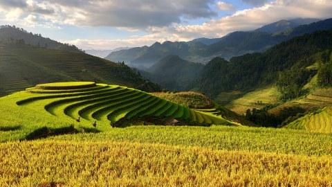 Vietnam, Reisterrassen