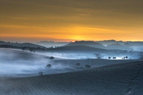 Vietnam, Teeplantagen
