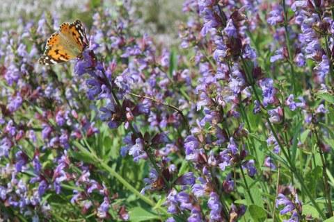 Botanischer Garten Blumenwiese