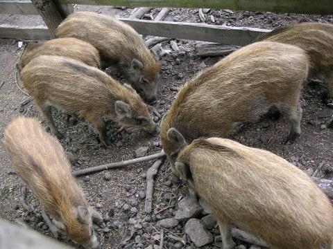 Wildlife Park Moritzburg