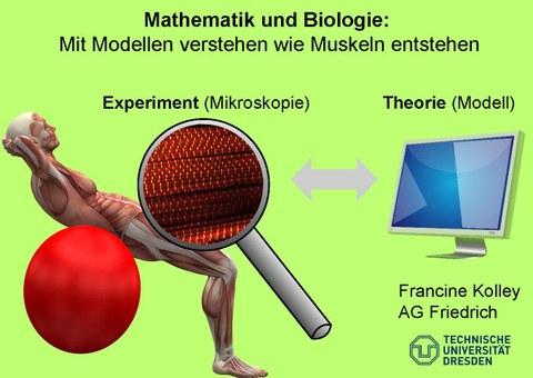Das Bild zeigt einen Menschen auf einen Ball. Zu sehen ist die Person dabei als anatomisches Modell mit Muskelgenwebe. Zusätzlich ist noch eine Lupe, die die Muskelfasern näher zeigt zu sheen und eien Computer. Text im Bild: Mit Modellen verstehen wie Muskeln entstehen.