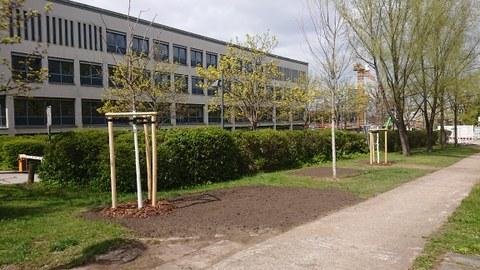 Foto, das neu gepflanzte Patenbäume vor dem Recknagelbau zeigt