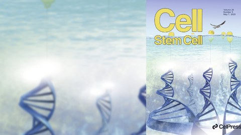 Cover Cell Stem Cell