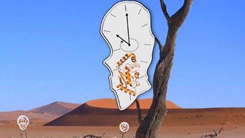 Ein knorriger, kahler Baum inmitten einer Wüstenlandschaft, daran hängen zwei schematiosche Darstellungen eines Enzyms in verzerrter Uhrenform