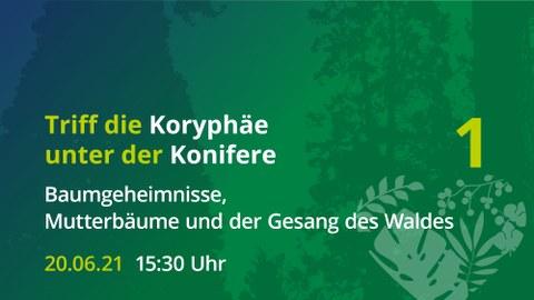 """Ankündigung der Veranstaltung """"Die Koryphäe unter den Koniferen"""", gelb auf grünem Untergrund"""