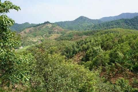 Baumdiversität