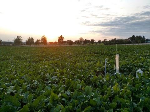 Ein Feld mit Blattgemüse, im Hintergrund stehen vereinzelt Bäume. Rechts im Vordergrund eine Messtation.