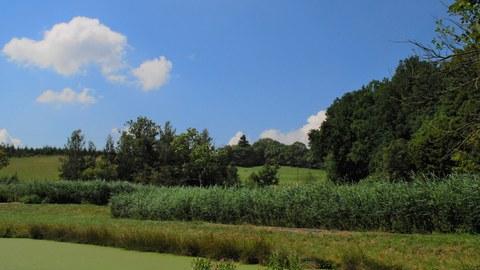 Landschaft mit Wiese (vorn), dahinter niedrige Baumgruppen, blauer Himmel mit wenigen Wolken.