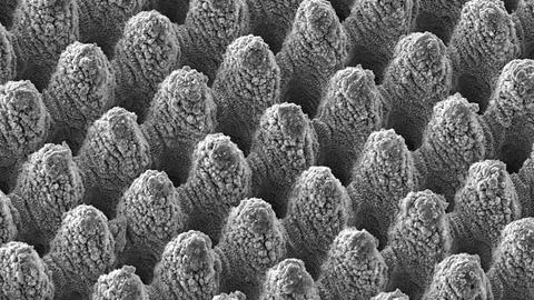 Strukturelemente selbstreinigende Oberflächen